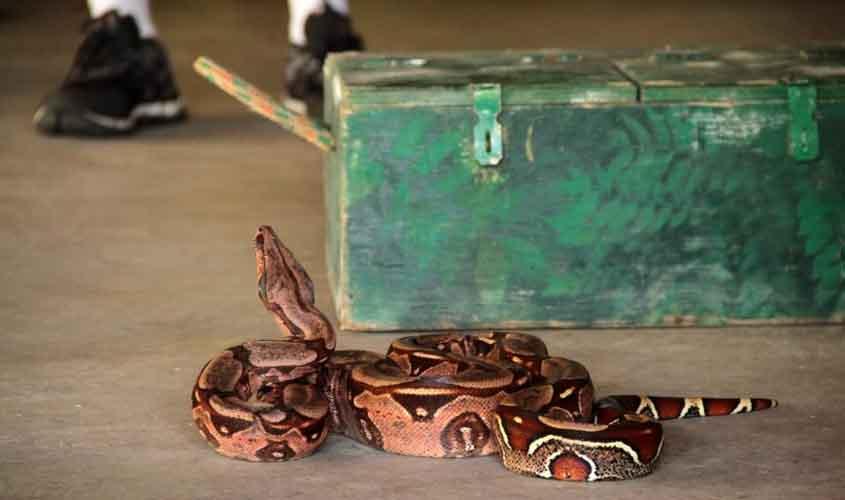 Lixo acumulado no período de chuva atrai animais peçonhentos às residências em Rondônia