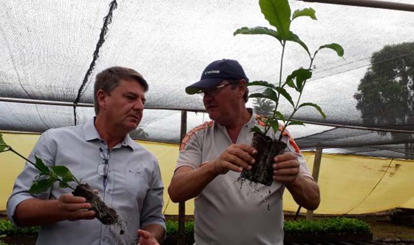 Viveiro de Nova Brasil�ndia cultiva mudas de caf� clonal em embalagens biodegrad�veis