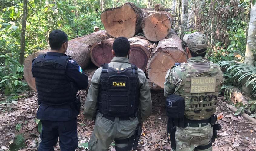 Sawmill and logging machinery seized in Sete de Setembro Indigenous Land